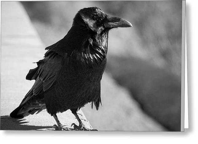Raven Iv Bw Greeting Card