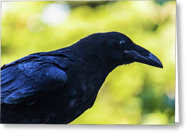 Greeting Card featuring the photograph Raven by Jonny D