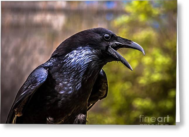 Raven Profile Greeting Card