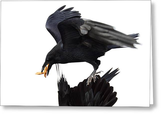Greeting Card featuring the photograph Ravens by Jane Melgaard
