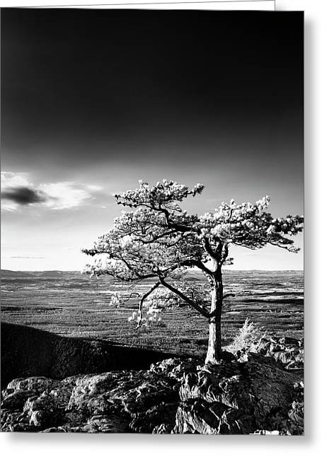 Greeting Card featuring the photograph Ravens Roost Ir Tree by Kevin Blackburn