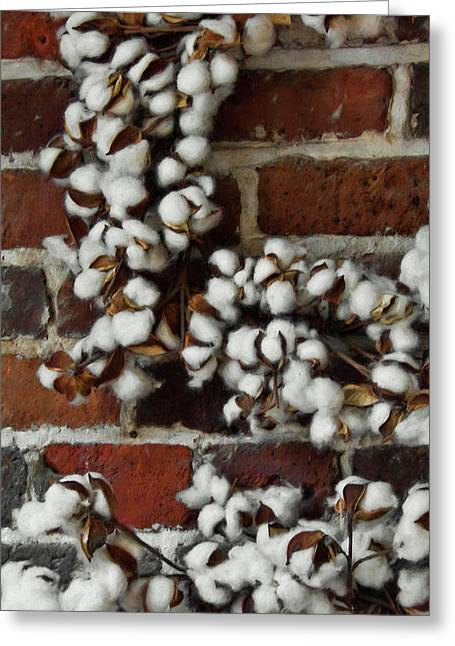 Raw Cotton Greeting Card by JAMART Photography