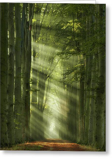 Rays Of Autumn II Greeting Card by Martin Podt
