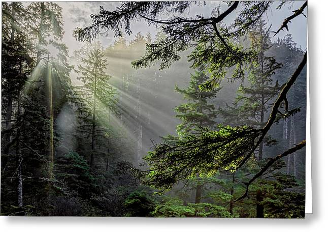 Morning Rays Through An Oregon Rain Forest Greeting Card