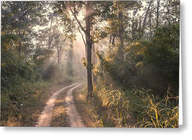 Rays Through Jungle Greeting Card