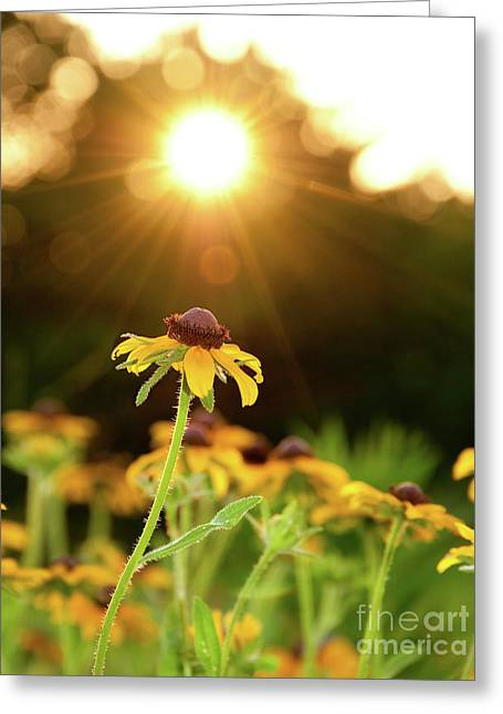 Reaching For Evening Sun Greeting Card