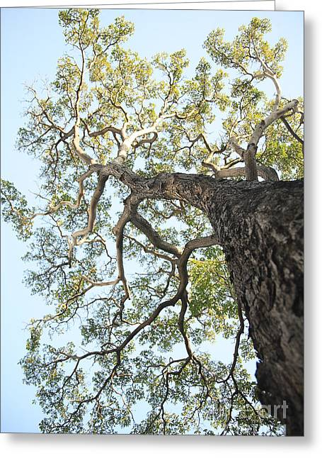 Reaching For The Sky Greeting Card by Brandon Tabiolo - Printscapes