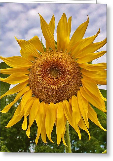 Reaching For The Sky Greeting Card by Bruce Bley