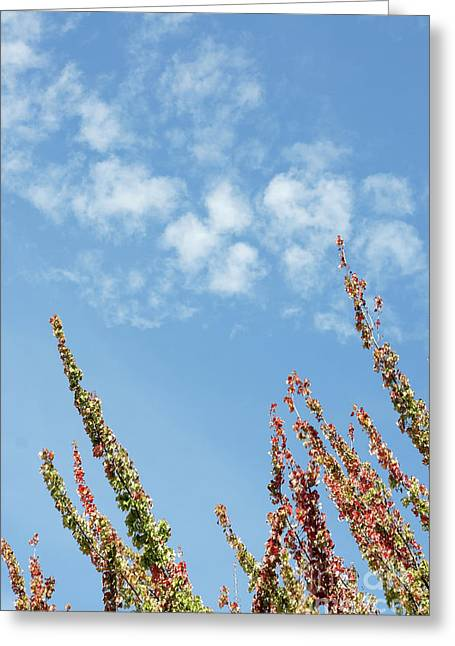Reaching For The Sky Greeting Card by John  Mitchell