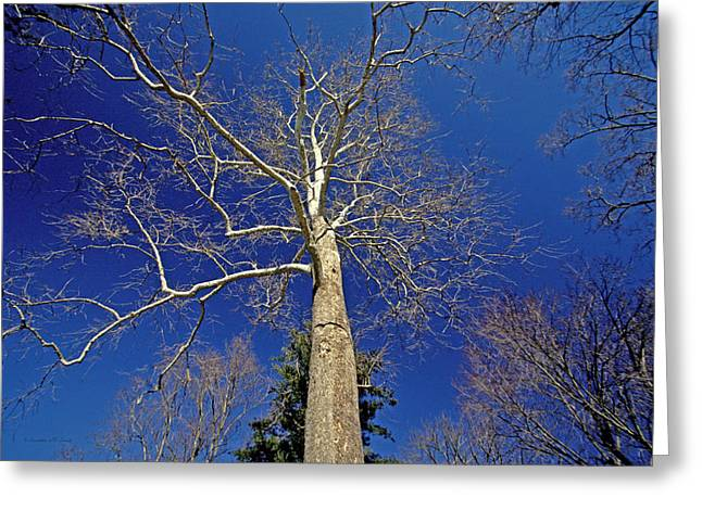 Greeting Card featuring the photograph Reaching For The Sky by Suzanne Stout