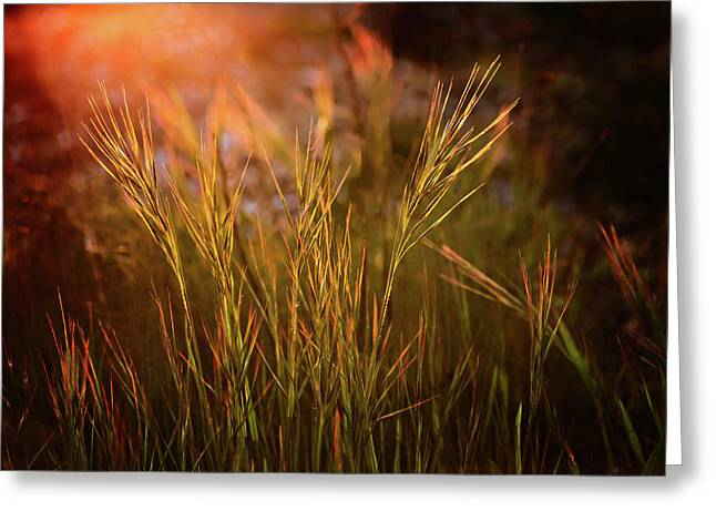 Greeting Card featuring the photograph Reaching For The Sunset Dark by Mary Jo Allen