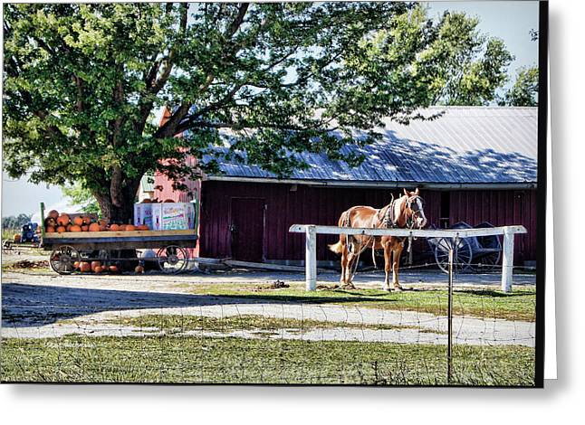Greeting Card featuring the photograph Ready And Waiting by Cricket Hackmann