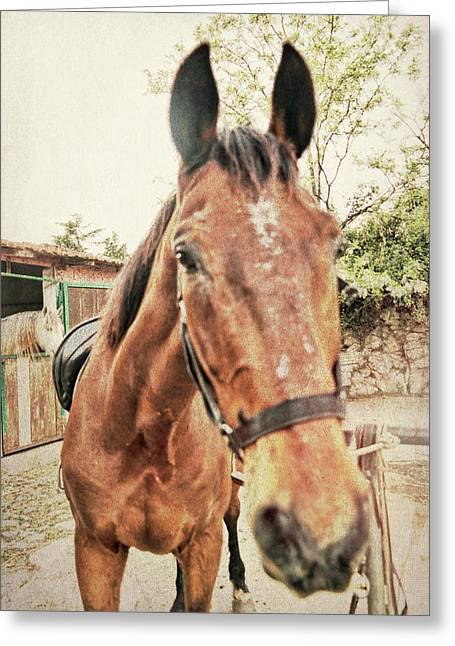 Greeting Card featuring the photograph Ready by Dressage Design