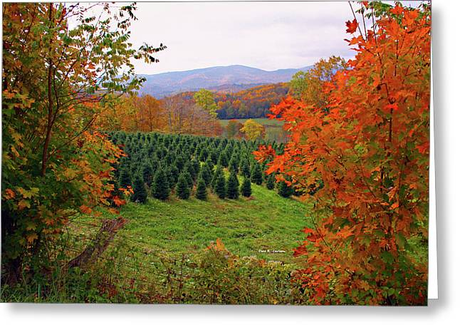 Ready For Christmas Greeting Card by Dale R Carlson