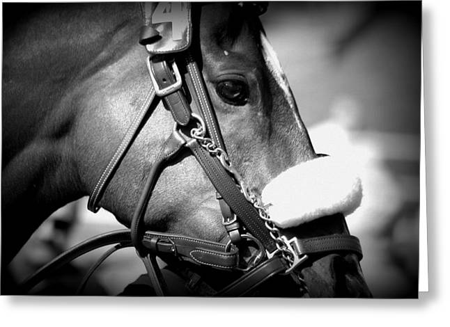 Recently Sold -  - Race Horse Greeting Cards - Ready Greeting Card by Lori Seaman