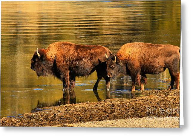 Greeting Card featuring the photograph Ready To Cross The Yellowstone by Adam Jewell
