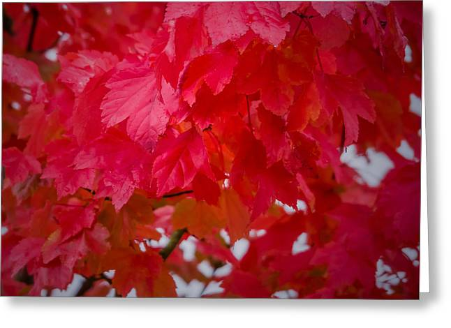 Ready To Fall Greeting Card