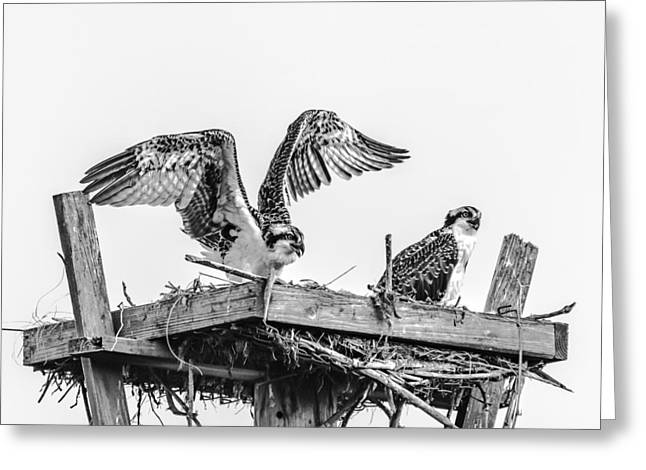 Ready To Fly Bw Greeting Card