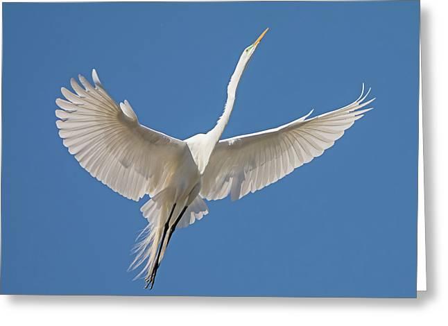 Elegant Flight Greeting Card by Loree Johnson