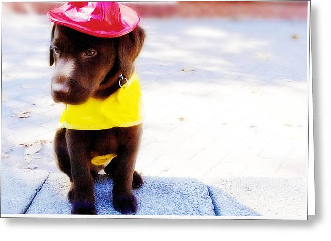 Fire Pup Ready To Roll Greeting Card by Toni Hopper