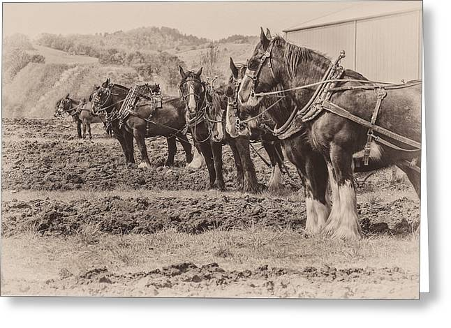 Ready To Plow Greeting Card by Joe Hudspeth