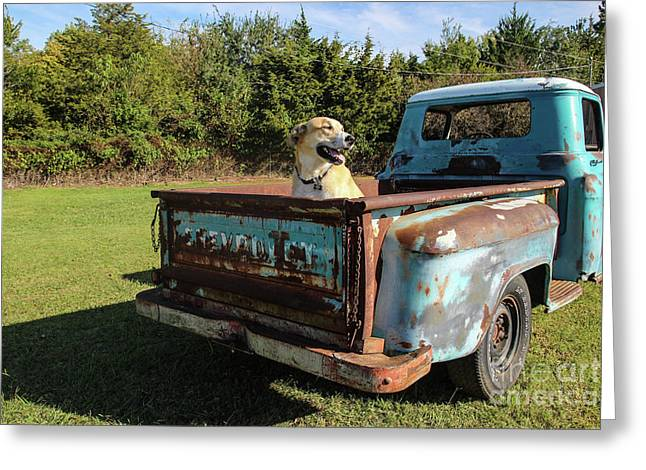Ready To Roll Greeting Card by Laura Deerwester