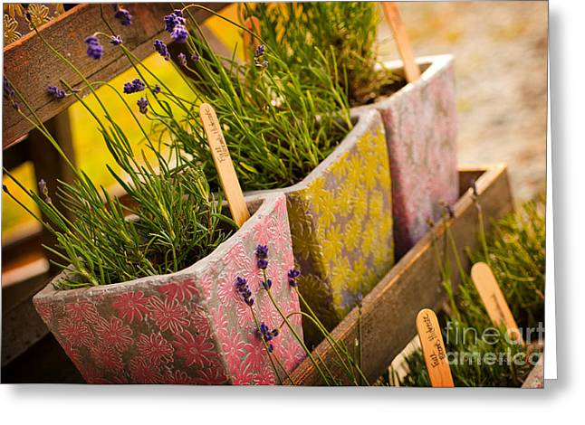 Ready To Take Home Greeting Card by Joy Gerow