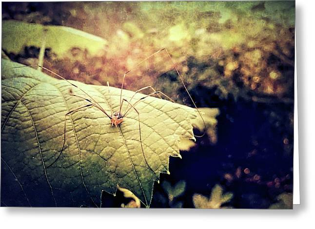 Realm Of The Harvestman Greeting Card