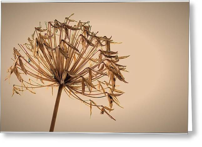 Greeting Card featuring the photograph Reap What You Sow by Tim Nichols