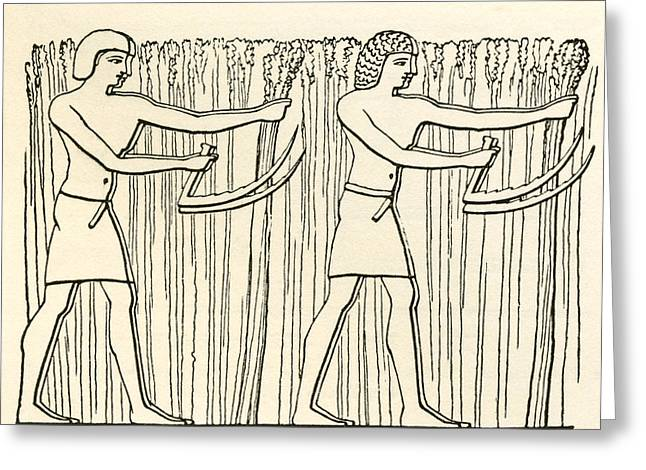 Reaping In Ancient Egypt. From The Greeting Card by Vintage Design Pics