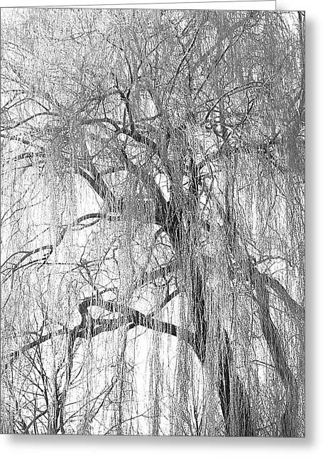 Weeping willow trees greeting cards page 10 of 40 fine art america reaping willow greeting card m4hsunfo