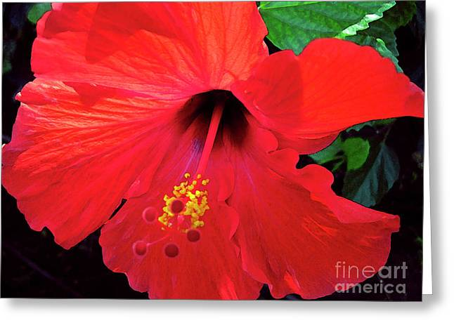Reb Hibiscus Flower Greeting Card