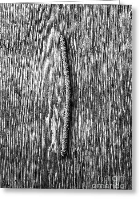 Rebar On Wood Bw Greeting Card by YoPedro