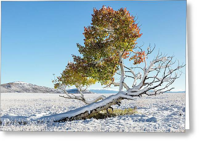 Reclining Tree With Snow Greeting Card
