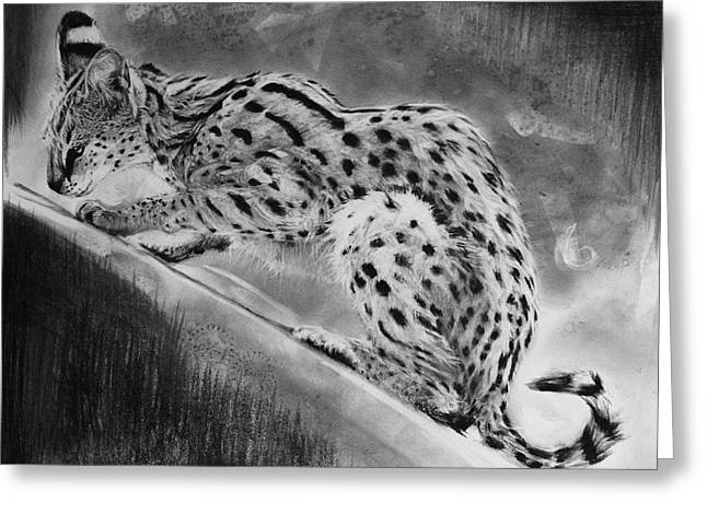 Recoil - Serval Greeting Card by Susie Gordon