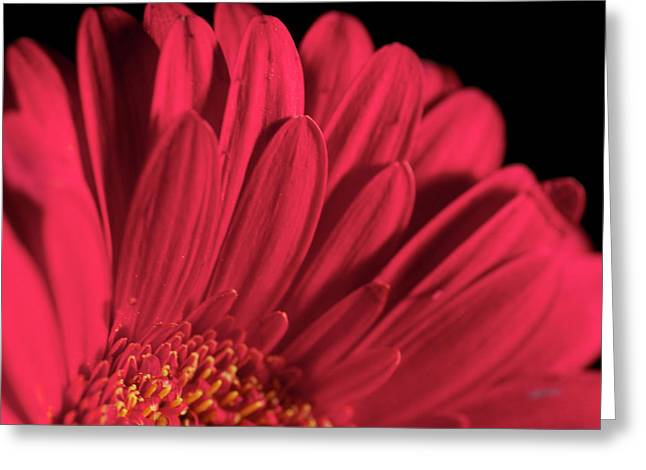 Red 4 Greeting Card by Sheryl Thomas
