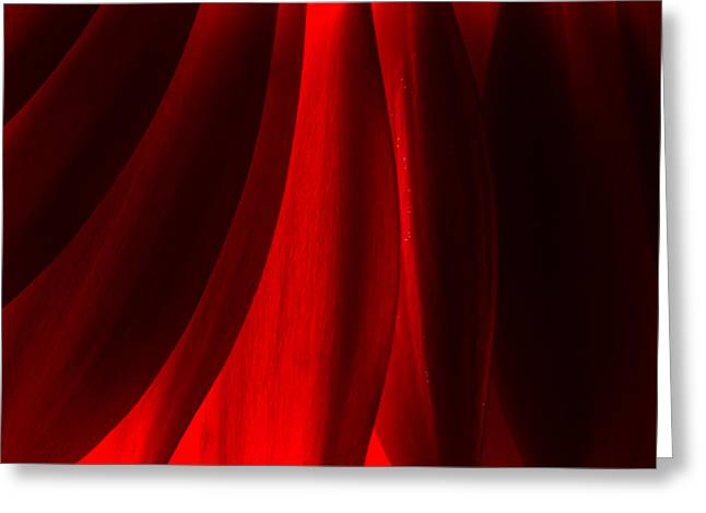 Red Abstract Of Chrysanthemum Wildflower Greeting Card
