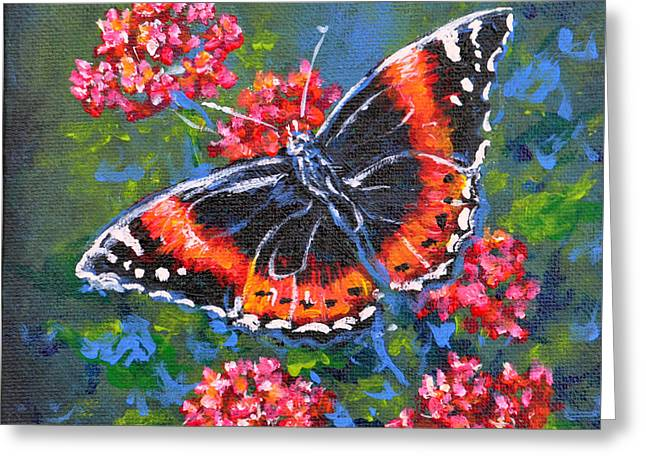 Red Admiral Greeting Card by Gail Butler