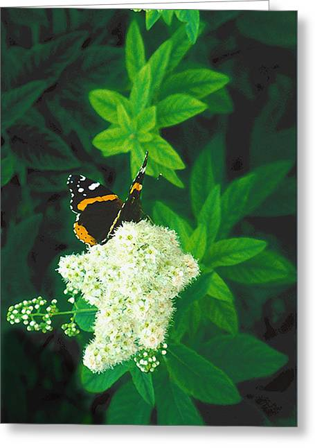 Red Admiral On Spirea Greeting Card