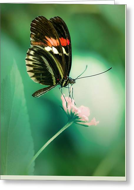 Red And Black Butterfly On White Flower Greeting Card