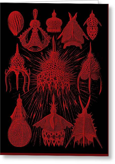 Red And Black Cyrtoidea Greeting Card by Diane Addis