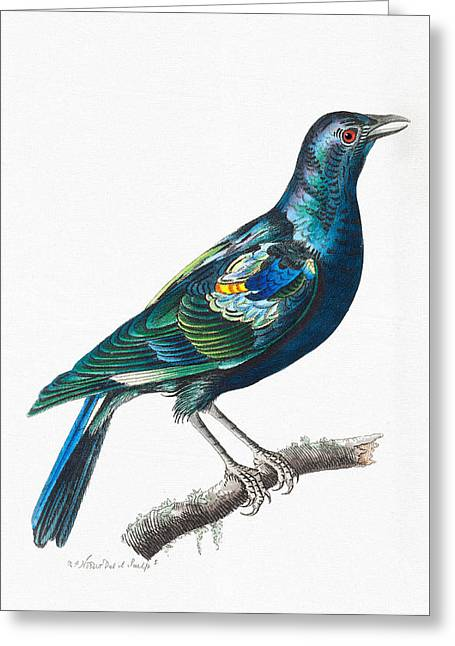 Red And Blue Colorful Bird Art - The Shining Stare Greeting Card