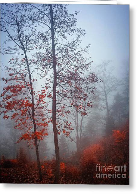 Greeting Card featuring the photograph Red And Blue by Elena Elisseeva