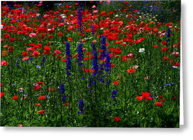 Red And Blue Wildflowers And Poppies Greeting Card by Martin Morehead