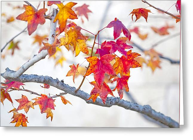 Red And Gold Leaves Abstract Greeting Card by Art Block Collections