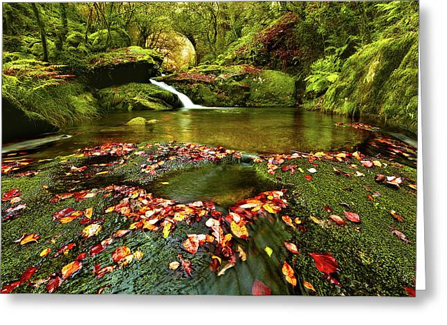 Greeting Card featuring the photograph Red And Green by Jorge Maia