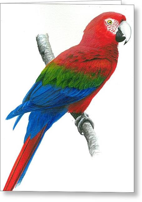 Red And Green Macaw Greeting Card by Christopher Cox
