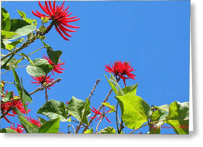 Red And Green San Diego Flowers Greeting Card by Doreen Whitelock
