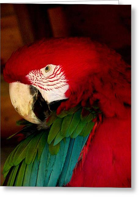 Red And Green Wing Macaw Greeting Card