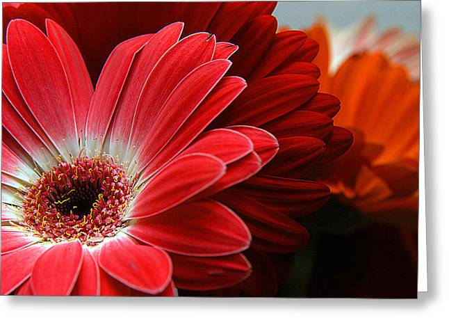 Red And Orange Florals Greeting Card by Clayton Bruster